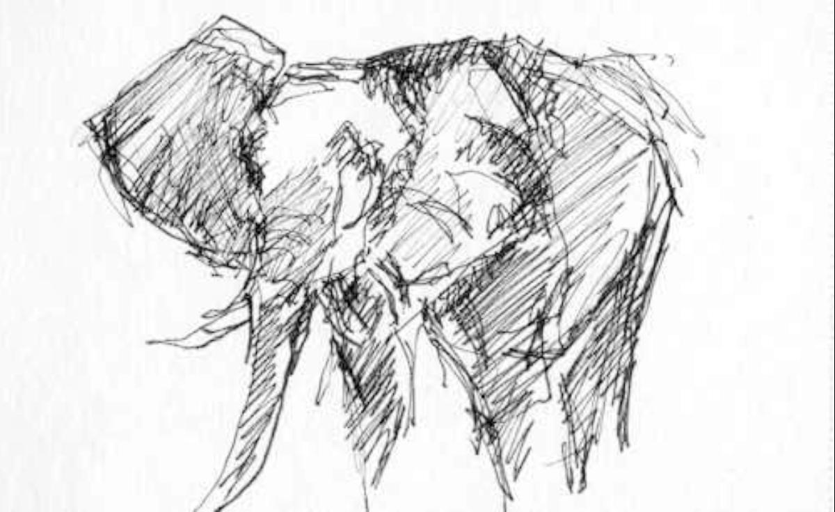 Eléphant - 2013