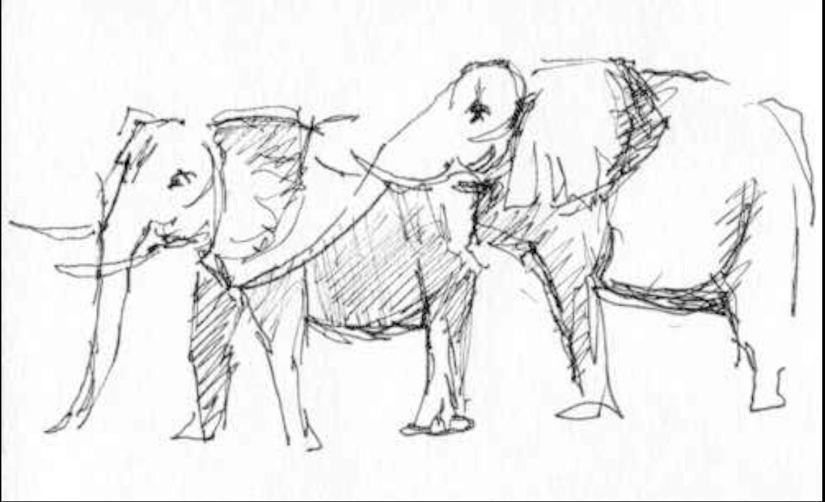 Eléphants - 2013